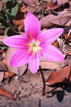 Orquídea salvaje??? No lo sé, pero sí preciosa!!