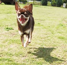 "Dog Fridge Magnet /""Dog is such a small word..../"" Yellow Labrador Retriever"