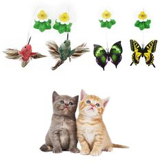 1 Pcs Electric Rotating Colorful Butterfly Funny Cat Toys Pet Seat ScratchToy For Cats Kitten Free Shipping