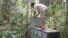 Releasing a wild male orangutan