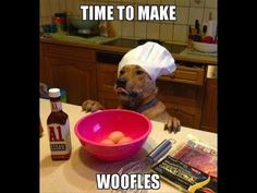 340 300 Top Funny Dogs Memes 300 Pic Ideas In 2021 حيوان البيتبول كنغر