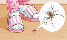 Ezért ne öld meg soha a lakásban a pókot! Natural Spider Repellant, Get Rid Of Spiders, House Spider, Cleaning Hacks, Diy And Crafts, Life Hacks, Marvel, Creative, Remedies