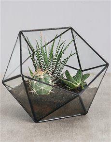 flowers: Cactus and Succulent With Potting Soil! Succulent Images, Succulent Planter Diy, Cacti And Succulents, Finding A New Hobby, Creative Kids Snacks, Buy Cactus, Healthy Filling Snacks, Glass Terrarium, Terrarium Plants