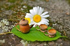 Basteln mit Naturmaterialien - Ein Mini-Teekanne und -tassen