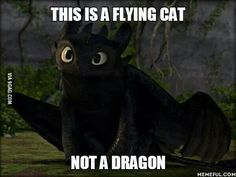 Basically in our world toothless is 40% dog 60% cat ( black panther ) In the httyd world toothless is just 100% dragon. In both worlds it is always 95% cute 5% deadly.