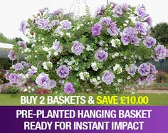 Hanging Basket Plants & Container Plant Mixes | Unwins Seeds