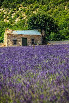 Provence by Massimo Galeno