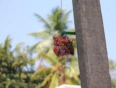 Bird Nesting Material Help :)