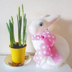 Spring bulbs #bunnyinabow
