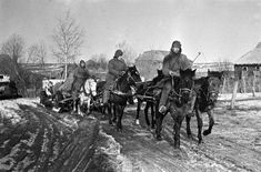 Eastern Front: A horse artillery train of the German 144 Infantry Division pushes to the frontline to the northwest of Vyasma, Smolensk region, March 1, 1943