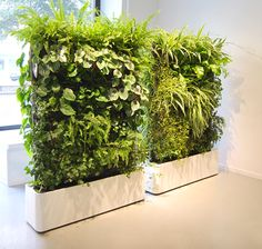 using green wall systems as room dividers