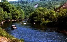 River Tamar,  Clitters Wood, Gunnislake