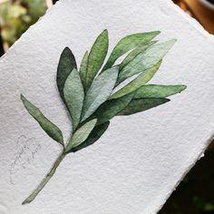 -Cardi Paper is thrilling 😠 thunder 😠 thugs . Watercolor Projects, Watercolor Plants, Watercolor Leaves, Watercolor Drawing, Watercolor Techniques, Watercolor Flowers, Painting & Drawing, Botanical Drawings, Botanical Art