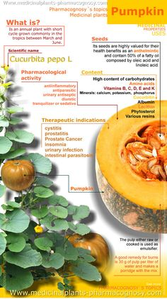 Pumpkin benefits. Infographic. Summary of the general characteristics of the Pumpkin. Medicinal properties, Benefits and uses more common