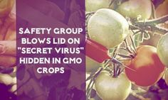 "Safety Group blows lid on ""secret virus"" hidden in GMO crops."