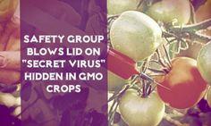 "Safety Group blows lid on ""secret virus"" hidden in GMO crops."