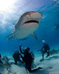 Shark dive #LiveYourLife #GuardianProtects