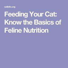 Feeding Your Cat: Know the Basics of Feline Nutrition