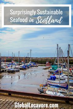 Enjoying a seaside picnic of sustainable seafood from the world famous Anstruther Fish Bar was a surprising highlight of my roadtrip from Edinburgh to Fife.