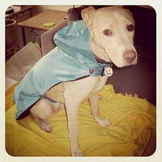 DIY dog raincoat from broken umbrella is evil genius Dog Umbrella, Waterproof Dog Coats, Dog Winter Coat, Winter Coats, Dog Raincoat, Do It Yourself Fashion, Dog Clothes Patterns, Dog Crafts, Dog Sweaters