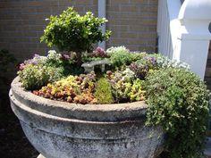 Amazing Miniature Gardens