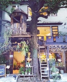 ドラマの舞台にもなった広尾のツリーハウスカフェ「レ・グラン・ザルブル」