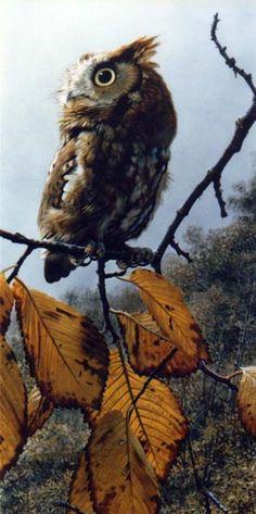 Carl Brenders Fireball Screech Owl