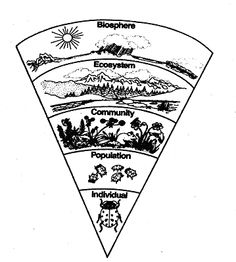 Organism, Population, Community, Ecosystem, Biosphere