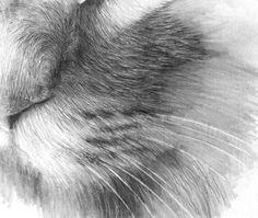Drawing Realistic Hair With Pencil Part Two-Cat Drawing - Art * Maltechniken - Katzen Realistic Rose, Realistic Drawings, Love Drawings, Animal Drawings, Pencil Drawings, Drawing Animals, Pencil Sketching, Drawing Techniques, Drawing Tips