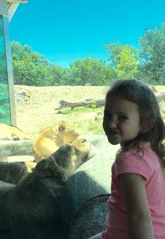Sweet Olivia and yes a lion basking in the sun Omaha Nebraska