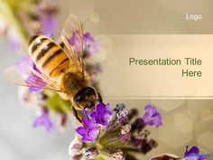 Free funeral flower ppt template ideas for the house pinterest free bee ppt template toneelgroepblik Images