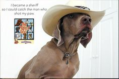 Emergency Recall Training for Dogs All Dogs, Dogs And Puppies, Doggies, Puppy Trainer, Cowboy Up, Weimaraner, Animal Photography, Photography Ideas, Dog Training