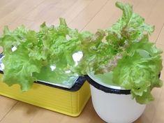 Blog Entry, Vegetables, Kids, Food, Young Children, Boys, Essen, Vegetable Recipes, Children