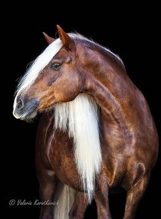 Magnificent Horse! . Please also visit www.JustForYouPropheticArt.com for colorful, inspirational art and stories. Thank you so much!