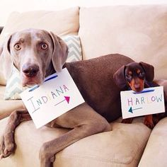 This is Indiana and Harlow. They are best friends. | 17 Pictures Of Instagram's Goofiest Best Friends