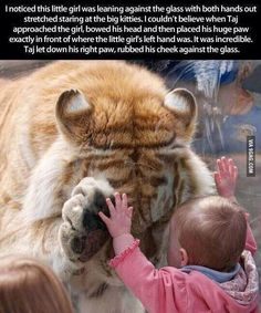 OMG, is that the most famous and fabulous tiger :0