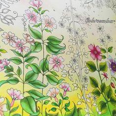 Secret Garden Colouring Chris Cheng Artist Color Combos Colored Pencils Johanna Basford Prismacolor Watercolor Adult Coloring