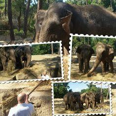 Zoo de la Palmyre en Charentes maritimes 17
