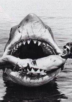 Steven Spielberg quite literally in Jaws<3