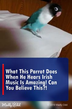 What this parrot does when he hears Irish music is amazing! Can you believe this? Funny Animal Videos, Funny Animal Pictures, Funny Animals, Cute Animals, Funny Videos, Smiling Animals, Pretty Animals, Unusual Animals, Funny Pets