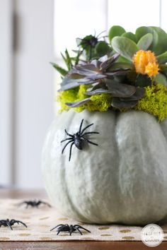 Succulent Pumpkin Planter // Keep your #halloween #decor Spooky Chic with this stylish pumpkin turned succulent planter. Use some fake spiders for added creepiness.