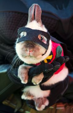 Ridiculous Halloween Pet Costumes. @Benjamin Arp, you and Rudy could be Batman and Robin.