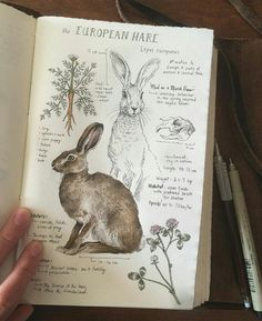 This is beyond fabulous. I absolutely love this natural history illustration of The European Hare. via This is beyond fabulous. I absolutely love this natural history illustration of The European Hare. Sketch Journal, Journal Pages, Journal Ideas, Drawing Journal, Journal Art, Diet Journal, Notebook Sketches, Artist Journal, Custom Journals