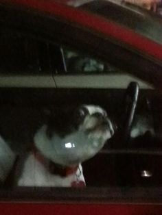 I sat next to this dog in the Walgreens parking lot for 5 minutes...
