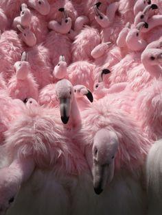 Soo many flamingos Beautiful Birds, Animals Beautiful, Cute Animals, Pink Animals, Beautiful Pictures, Fuchsia, Pastel Pink, Pink Love, Cutest Animals