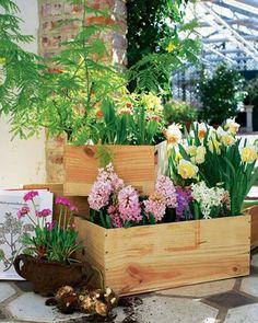 """ #FrischeDuefteAufDemBalkon · #mediterran ""  #Flieder syringa #Primel primula vulgaris #Mimose mimosa #Hyazinthe hyacinthus orientalis #Rosenstrauch rosa canina #Maigloeckchen convallaria majalis #Narzisse narcissus ( #SueddeutscheZeitungMagazin 13/2o11 #StilLeben "" Vom #Flakon zum #Balkon "" #SophieLabbe #Bulgari ) #Gardening [ #shoellerulrichm ]"