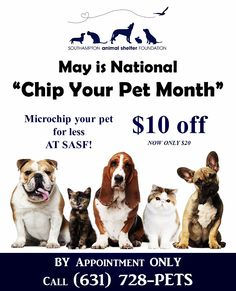 National Chip Your Pet Month!
