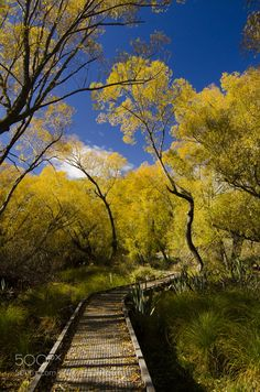 Autumn Trail by praelackofcolours
