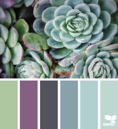 { succulent hues } image via: @talesofthetide