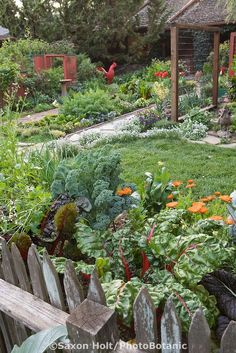 Looking over rustic wooden picket fence into Rosalind Creasy front yard garden with vegetable borders and chicken coop
